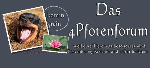 4Pfotenforum - das freundliche Tierforum
